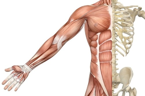 Chapter 3 – Skeletal system